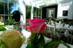 Wintergarten-Rosa-Rose