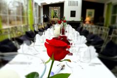 Wintergarten-Rote-Rose